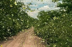 Image result for hình ảnh bướm bay đẹp