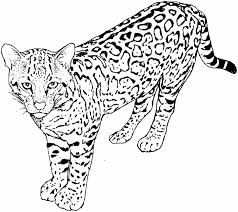 Small Picture Coloring Pages Of Cats And Kittens Coloring Coloring Pages