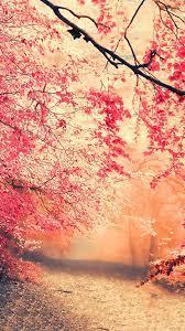 nature wallpaper phone cellphone ...