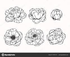 пион цветы рисование и эскиз с линии арт векторное изображение