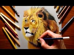 lion drawing color. Beautiful Lion Colored Pencil Drawing Of A Lion  Speed Draw  Jasmina Susak With Color T