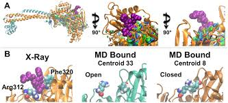 md reduced ensemble shows sitemap sites predicted small peptide binding scientific diagram