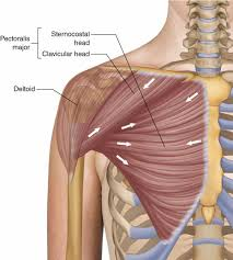 The goal is to identify what muscle is causing the problem and to determine why it's reacting. Adduct Extend And Rotate For Better Pecs Breaking Muscle