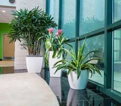 Office cubicle plants Low Maintenance Plants Add Some Life To Drab Office Cubicles Plantation Services Plants Add Some Life To Drab Office Cubicles Plantation Services