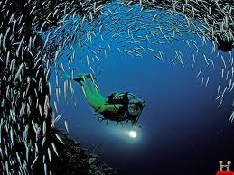 man among thousand fish amazing hd wallpaper