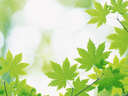 Leaves Powerpoint Background Wallpapers Back Ground Background
