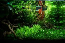 Alghe verdi a pelliccia alghe nere a pennello alghe puntiformi