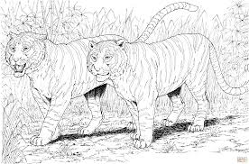 Small Picture Two Tigers coloring page Free Printable Coloring Pages