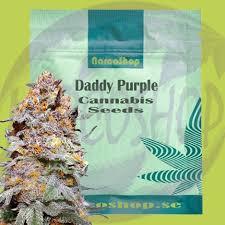Grand Daddy Purple Cannabis Seeds - NarcoShop