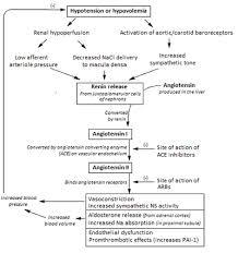 Renin Angiotensin System Wikipedia