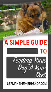 Simple Guide To Feeding A Raw Diet German Shepherd