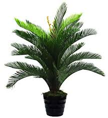 Buy Fourwalls Decorative <b>Artificial Cycas Palm</b> Floor <b>Plant</b> (90 cm ...