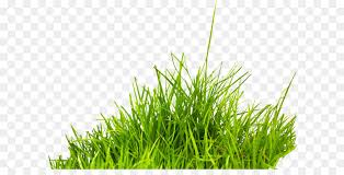 grass transparent background. Summer Information Icon - Grass Png Image, Green PNG Picture Transparent Background G