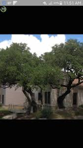 image may contain tree sky plant outdoor and nature robs tree service4