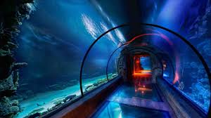 real underwater hotel. An Real Underwater Hotel Villa Is Opening In The Maldives This Year Undersea Rhtownandcountrymagcom .