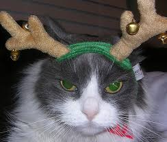 Image result for cats looking annoyed wearing santa hat