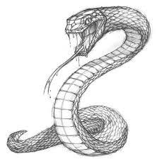 simple snake drawings in pencil. Drawings Of Reptiles Snake Sketch Medusa Drawing Spider Arm On Simple In Pencil