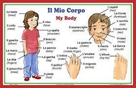 Human Body Parts Chart In English Amazon Com Italian Language School Poster Italian Words