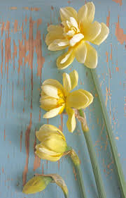 Best 25+ Narcissus flower pictures ideas on Pinterest | Jonquil ...