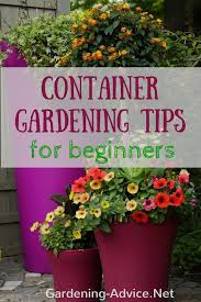 flower gardening for beginners. flower gardening for beginners m