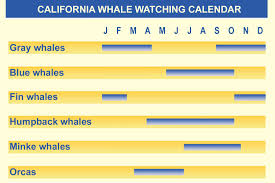 California Growing Season Chart California Whale Watching What You Can See By Month