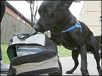 Image result for Sniffer dogs in schools for drugs within months
