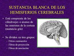 sustancia blanca de los hemisferios