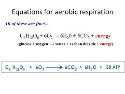 what is the equation for aerobic respiration in muscle cells