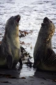 penguins a falklands photo essay org per nk
