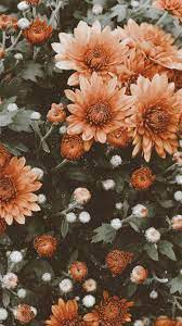 Aesthetic Flowers iPhone Wallpapers ...