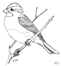 Small Picture Sparrows coloring pages Free Coloring Pages