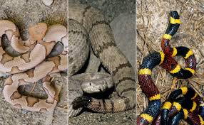 Black Snake With Diamond Pattern Custom Decorating