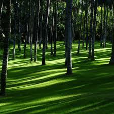 Green Grass Wallpaper 4K, Trees, Woods ...