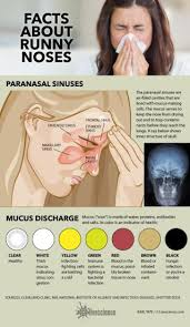 Sinus Chart What Your Snot Says About You Infographic Live Science