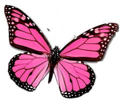 Resultado de imaxes para cometas mariposa rosa