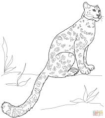 Snow Leopard Cub Coloring Pages Easy Amurr Adults Gecko Colouring