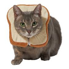 Frisco <b>Bread Cat</b> Costume, One Size - Chewy.com