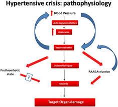 Frontiers Cardiovascular Hypertensive Crisis Recent