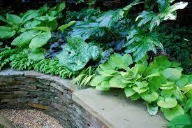 8 sumptuous shade garden plant combinations