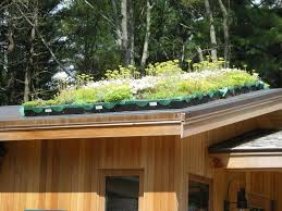 Rooftop Kitchen Garden 17 Best Images About Roof On Pinterest Gardens Green Roofs And
