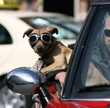 Ratgeber So Fährt Ihr Hund Sicher Im Auto Mit Welt