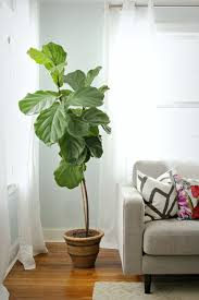 Simple Indoor Plant In Living Room