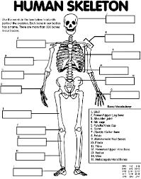 Human Skeleton Coloring Page Crayolacom