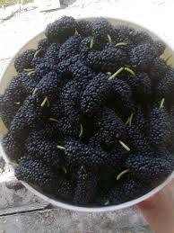 122 Best Gardenfruits Images On Pinterest  Fruit Plants And Iranian Fruit Trees