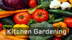 Kitchen Gardening What Is Kitchen Gardening Why Kitchen Gardening How To Grow