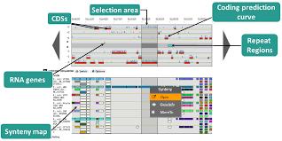 Genome Browser Microscope User Doc V3 13 4
