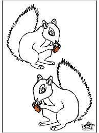 Eekhoorn 2 Kleurplaten Knaagdieren