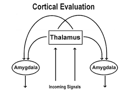 Image result for cortical evaluation
