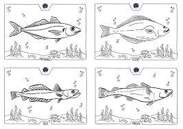 Noordzeevis Noordzeevis Uit Scheveningen