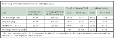 Corn Dry Down Chart Impact Of Plant Death On Grain Yield Of Corn